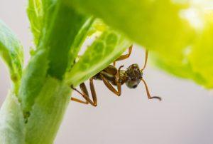Insekten im Garten...