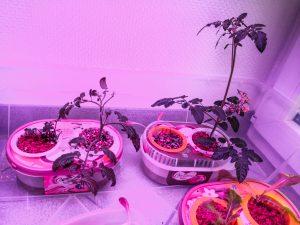 Homegardening Teil1 - Salat und Gemüse im Büro anbauen - der Anfang!