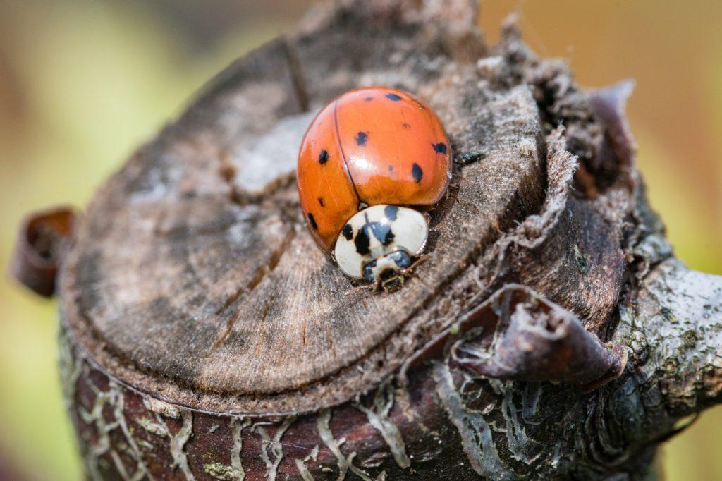 Fotos: Insekten
