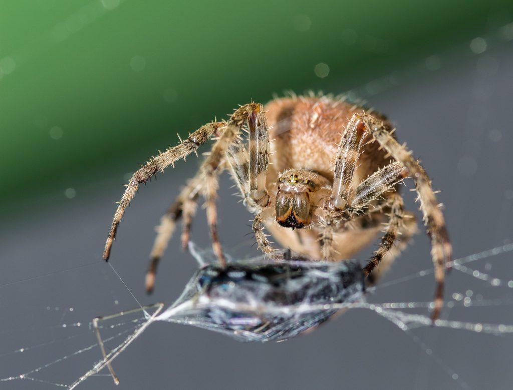 Fotos: Spinnen