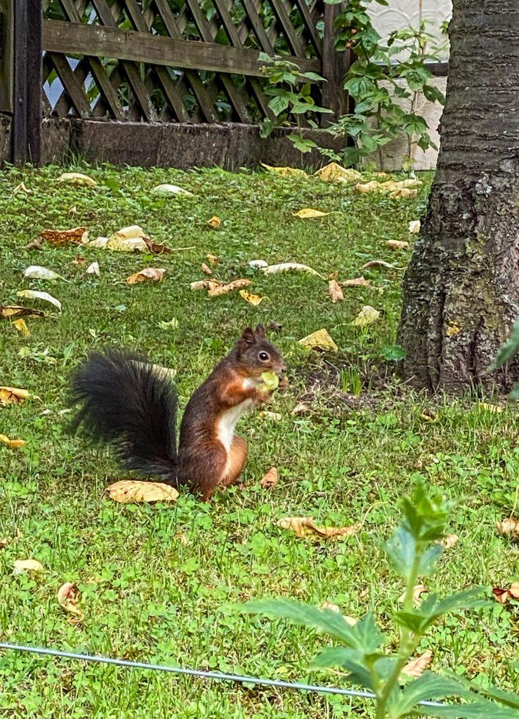 Fotos: Tiere im Garten, auf Feld und Flur